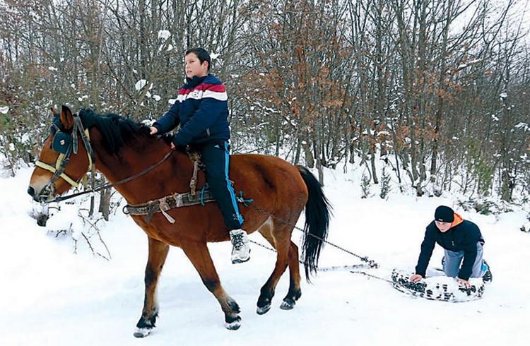 Фото: Новости/Д. Карадаревић