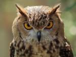 НАЈВЕЋЕ ЗИМОВАЛИШТЕ НА СВЕТУ: Кикиндске сове на ББЦ и у Вол стрит џорналу