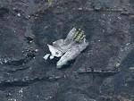 КОБНИ ЛЕТ: Бањалучанка и њен супруг из Бихаћа жртве пада авиона