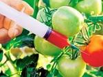 ЕУ: Државе могу да забране генетски модификоване усјеве