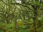 ЕНГЛЕСКА: Чудесна шума стварно постоји!