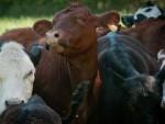СРЉАЊЕ ЗБОГ ЕВРОПСКЕ ПЕРСПЕКТИВЕ: Српском кривицом пољопривреду даве европски производи