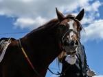 ЧЕЧЕНИЈА: Кадиров оптужио Запад за кршење права коња