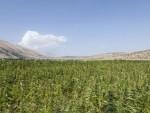 МОСКВА: Путин против легализације лаких дрога