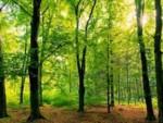 ЧУВАЈМО ПРИРОДУ: Данас је Светски дан заштите животне средине