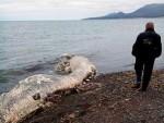 РУСИЈА, ОСТРВО ШАКЛИН: Море избацило леш мистериозног чудовишта