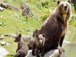 ОХРИДСКО ЈЕЗЕРО: Медвјед и туристи на истом језеру