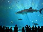 """53 МИЛИОНА ЛИТАРА ВОДЕ: Москва добила """"Москвариум"""" – највећи океанографски центар у Европи"""