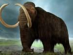 РУСКИ НАУЧНИЦИ: Пронађени остаци мамута који могу да се клонирају