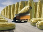 ЕВРОПСКА УНИЈА ПРИТИСКА: Србија дозвољава промет ГМ хране?