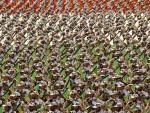 ВЕЛАЈЕТИ: Иран има дужност да буде уз Сирију у условима рата који јој је објавио Запад