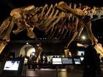 ЖИВЕО ПРЕ 100 МИЛИОНА ГОДИНА: У Њуjорку изложен скелет џиновског диносауруса