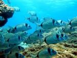 ШТА ЋЕМО ОСТАВИТИ ПОТОМЦИМА: У морима ће до 2050. бити више пластике него рибе