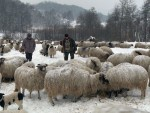 БРАНЕШЦИ: Номад са хиљаду оваца остао затрпан у снијегу