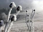 Zlatar pod snegom (7)