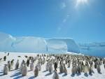 АНТАРКТИК: Због санте леда величине Рима угинуло 150.000 пингвина