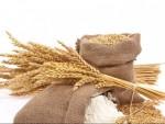 """""""ВОЛСТРИТ ЏУРНАЛ"""": Русија престиже САД и Канаду по извозу пшенице"""
