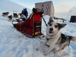 "СОЛОНИКОВ: Русија спремна за ""тихи рат"" на Арктику"