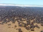 АРГЕНТИНА: Инвазија буба библијских размјера