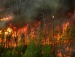 ИСТОК: Србима са Косова запаљена шума