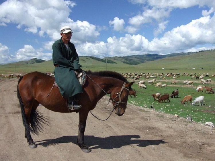 mongolija goran