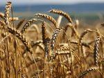 """""""БЛУМБЕРГ"""": Русија на храни зарадила више него на оружју"""