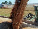 30 МИЛИОНА ТОНА: Русија ће продати више пшенице од свих из ЕУ