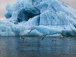 ЗАПАЊУЈУЋИ ПОДАЦИ: НАСА објавила видео о повлачењу леда на Арктику