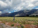 СМИЉЕ НА 50 ХЕКТАРА: Кустурица ће градити дестилерију етеричних уља у Билећи