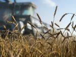 ПАДАЈУ РЕКОРДИ: Санкције позлатиле руску пољопривреду