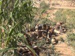 УЗ ПОМОЋ РУСКЕ АВИЈАЦИЈЕ: Сиријска војска ликвидирала 2.100 милитаната код Хаме