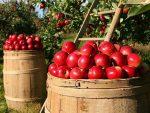 ОКРЕТАЊЕ БУДУЋНОСТИ: Русија би могла да постане лидер у органској производњи