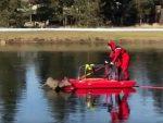 ОРЕГОН: Необично спасавање насуканог ланета