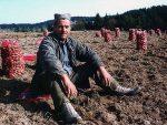 ОД ИЗВОЗНИКА ДО УВОЗНИКА: Кромпира мање производимо а највише увозимо из Немачке