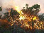 """""""ВАТРЕНИ"""" У АКЦИЈИ: Хрвати бакљама запалили чувено острво"""