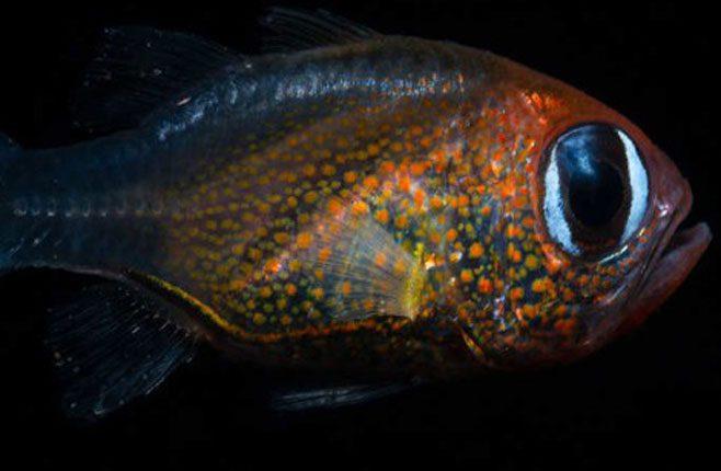 НА ПЕТ КОНТИНЕНАТА И ТРИ ОКЕАНА: У 2019. откривена 71 нова врста биљака и животиња