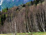 ЦЕЛЕ ПОРОДИЦЕ ПОД ШАТОРИМА: Руси траже спас од короне у шумама Кавказа