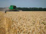 Американци предвиђају: Русију чека рекордан принос пшенице