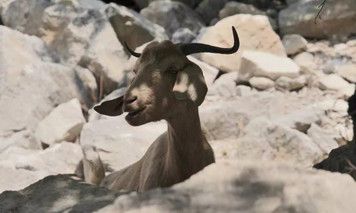 СВЕСНИ ШТА РАДЕ: Британска војска на Кипру уништава усеве, побила хиљаде домаћих животиња, прети и заштићеним врстама
