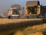 ЗЕМЉА КОЈА ПРОДАЈЕ НАЈВИШЕ ПШЕНИЦЕ НА СВЕТУ: Како је Русија постала светски лидер у извозу пшенице?