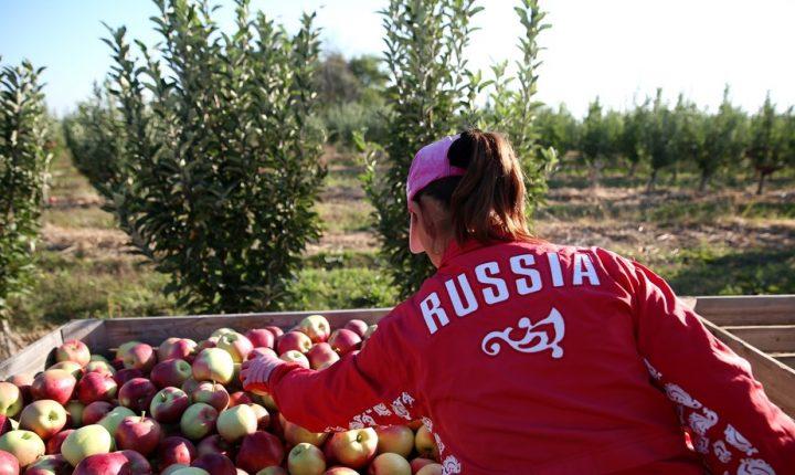 РТ: Извоз руских пољопривредних производа могао би ове године достићи 30 милијарди долара