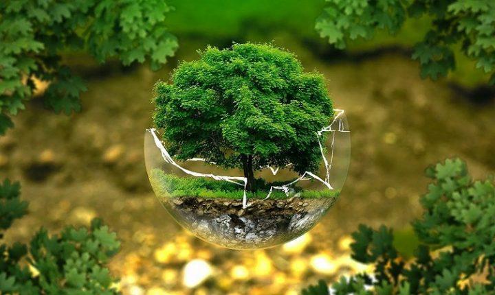 ПРЕД НЕСТАНКОМ: Угрожена трећина свих врста дрвећа у свету